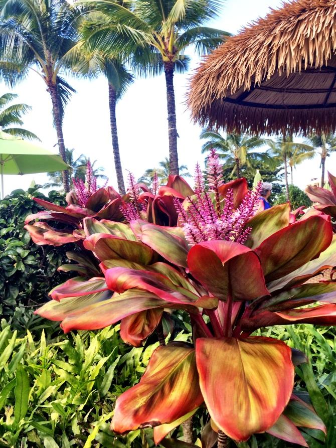 hawaii - kauai nature