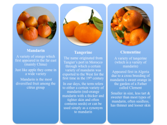 Mandarin, Tangerine and Clementine can all look pretty much similar but each still got some interesting characteristics